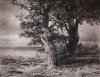 Oaks on the shore, 1867, savrasov