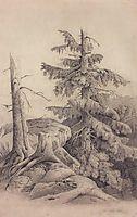 Spruce, c.1850, savrasov