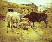 Bullocks, 1885, serov