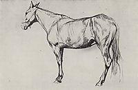 Horse, 1884, serov