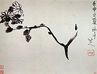 Chrysantheme, 16, shanren