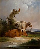Cows, White Cow Standing, shayer