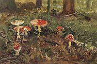Amanita, 1879, shishkin
