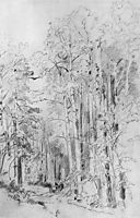 Aspen on the way to Kivach, 1889, shishkin