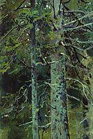 Forest, shishkin