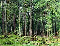 Forest in Mordvinovo, 1891, shishkin
