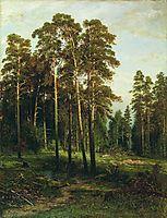 Pine forest , shishkin