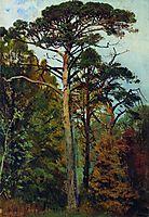 Pines, shishkin