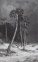 Pines, 1892, shishkin