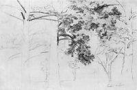 Pines, 1895, shishkin