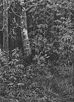 Thicket, 1879, shishkin