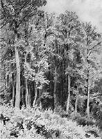 Trees. Kozlovka-Zaseka, 1873, shishkin