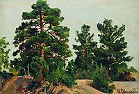 Young pines, shishkin
