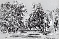 Zelenina grove, 1871, shishkin