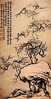 Prunus among the Rocks, 1707, shitao