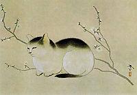 Cat, shunso
