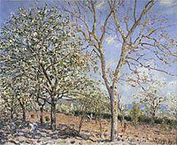 Trees in Bloom, 1889, sisley