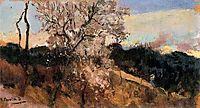 Almond trees in Asis, sorolla