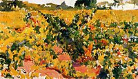 Study of Vineyard, sorolla