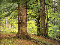 Beech Trees, 1895, steele