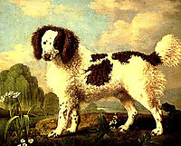 Brown and White Norfolk or Water Spaniel, 1778, stubbs