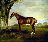 A Chestnut Racehorse, stubbs