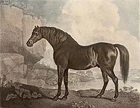 Marske Horse, stubbs