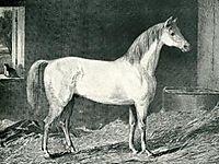 Messenger Horse, stubbs