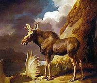 The Moose, 1773, stubbs