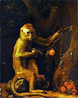 Portrait of a Monkey , 1774, stubbs