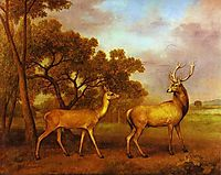 Red Deer Stag and Hind, 1792, stubbs