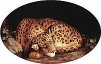 Sleeping Leopard, 1777, stubbs