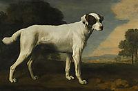 Viscount Gormanston-s White Dog, 1781, stubbs