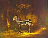 Zebra, 1763, stubbs