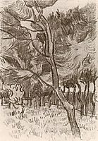 Pine Trees in the Garden of the Asylum, 1889, vangogh