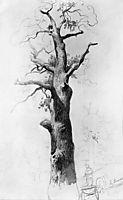 The Trunk of an Old Oak, 1869, vasilyev