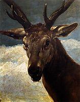 A deer-s head, 1626-27, velazquez