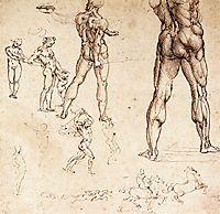 Anatomical studies, c.1505, vinci