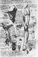 Anatomical studies (larynx and leg), 1510, vinci