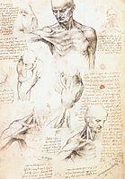 Anatomical studies of a male shoulder, 1509-1510, vinci
