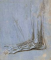 The anatomy of a foot, c.1485, vinci
