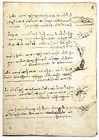 Codex on the flight of birds, vinci