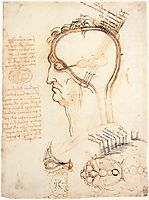 Comparison of scalp skin and onion, 1489, vinci