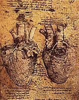 Drawing of the Heart and its Blood Vessels, from the Anatomical Notebooks, vinci