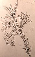 Drawing of lilies, for an Annunciation, c.1500, vinci