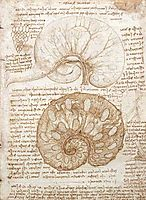 Drawing of the uterus of a pregnant cow, 1508, vinci
