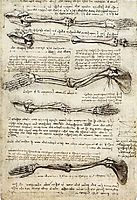 Studies of the Arm showing the Movements made by the Biceps, vinci