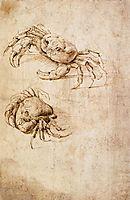Studies of crabs, vinci