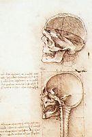 Studies of human skull, 1489, vinci