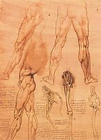 Studies of legs of man and the leg of a horse, 1506-1507, vinci